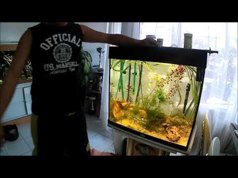 Découvrir les lamblias de lenfant
