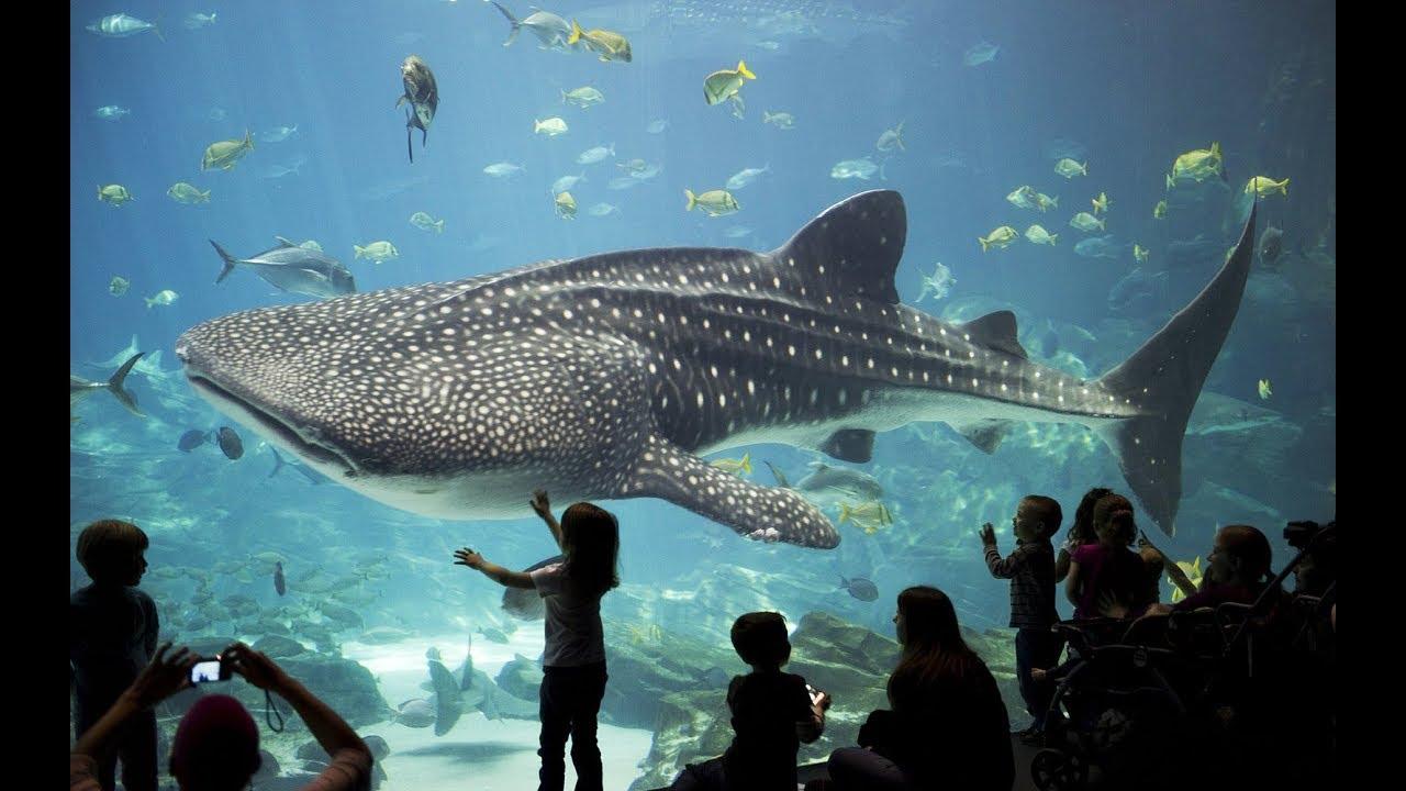 Visit the Georgia Aquarium