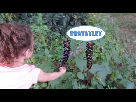 Poisonous Berries! (WK 194.6) | Bratayley