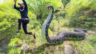 Anaconda Snake in Real Life Video