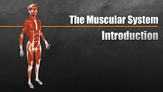 CH05-MOVEMENT IN ANIMALS-PART08-MUSCLES – MUSCULAR SYSTEM01