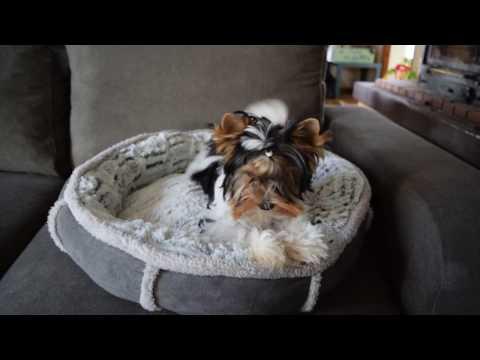 Schema di cucciolo di vermi