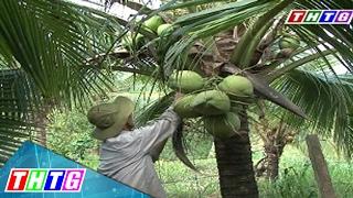 """Cây Lành Trái Ngọt """"Dừa Bến Tre"""""""