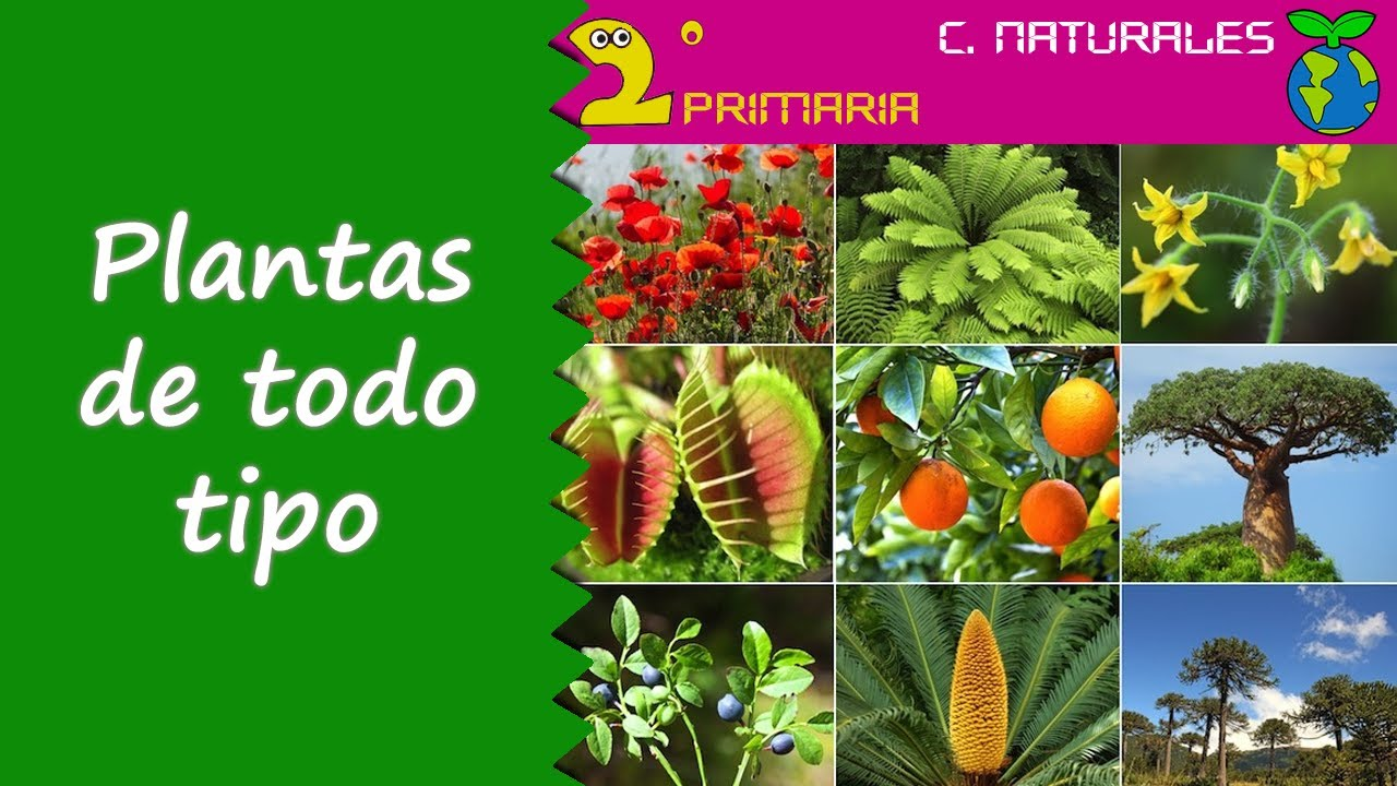 Ciencias de la Naturaleza. 2º Primaria. Tema 5. Clasificación de las plantas