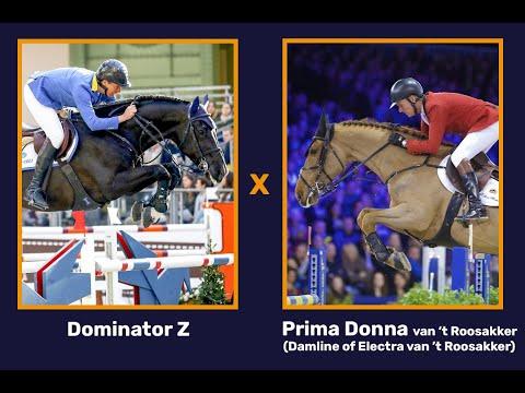 Dominator Z x Prima Donna van 't Roosakker (gender: filly)