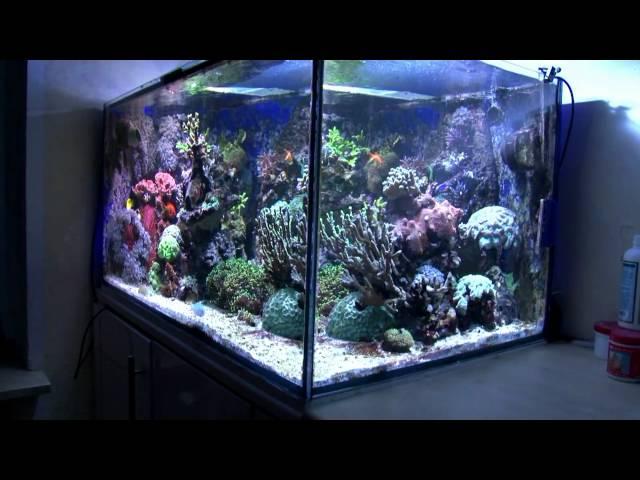 Reeftank - Meerwasseraquarium 500l
