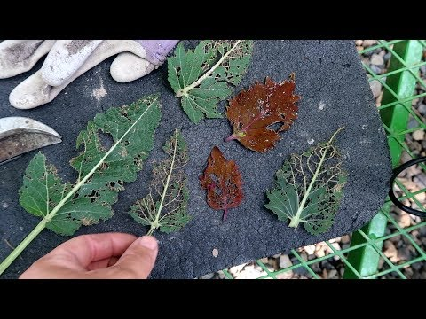 Battling Insects & Weeds! 😬🌿// Garden Answer