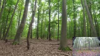 Wood you fly here?  FPV in the Woods.