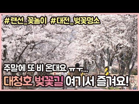 🌸대전 벚꽃명소 대청호 오동선 벚꽃길 랜선 꽃놀이🌸ㅣ 주말에 비☔ 오니까 벚꽃은 여기서 보세요~