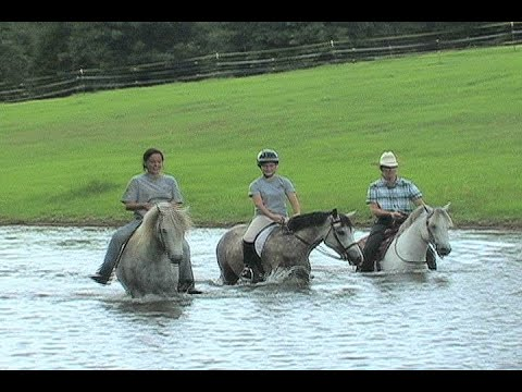 , title : 'THE WELSH PONY  -  LAZY J WELSH PONY RANCH, LINDEN, TX