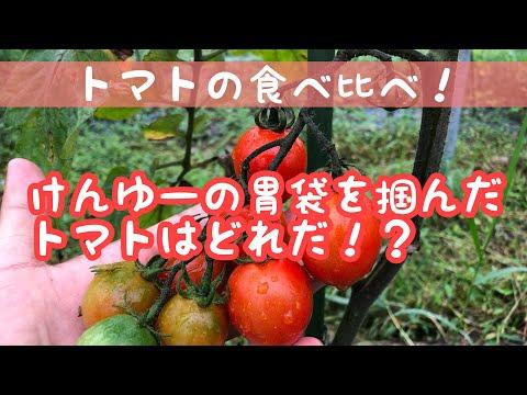 , title : '【トマト】ファンシープラム,スイートプラム,レッドミディの紹介!一番美味しかったのは!?