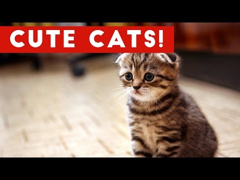 A Very Cute Cat Compilation