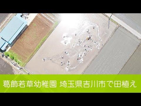 葛飾若草幼稚園 田植え(2018/5/11 埼玉県吉川市)