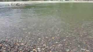 Волны у слияния Чемала и Катуни