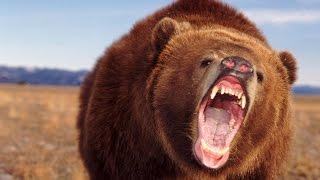 Бокс с медведем смешно