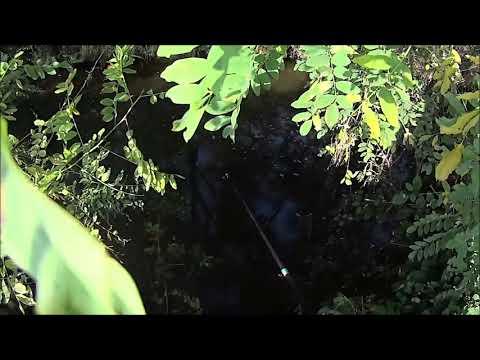 Video che pesca in un seroglazka
