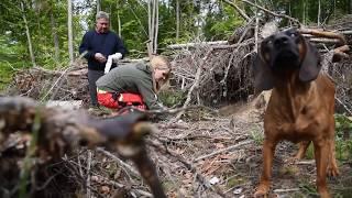 Video zu: Pakt für den Wald
