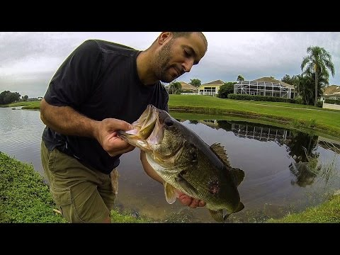 BASS FISHING-GIANT Florida Golf Course Pond Bass #2