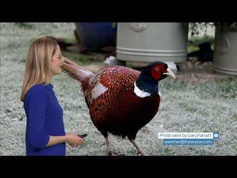 Sally's winter picture (UK) - ITV London weather - 4th December 2019