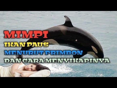 MIMPI PAUS (Menurut Tafsir Primbon & Cara Menyikapinya)
