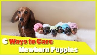 6 Ways to take Care for Newborn Puppies week by week