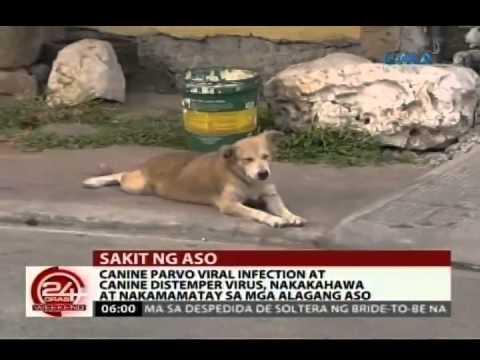Nagbigay ng puppy ng isang tablet mula sa mga worm ay nagsimula pagtatae kung ano ang gagawin ...
