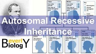 Autosomal Recessive Genetics Inheritance