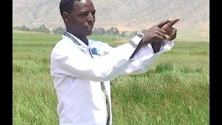 Eritrean Music : ሰንዓፈ ብ  ኣሚነ  (ወዲ በይን) Senafe Amine Beyn (Wedi Beyn) --2016