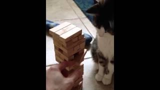 Jenga Cat