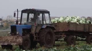 Крестьянско - фермерское хозяйство Гвоздевых.