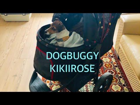 HUNDEBUGGY HAUCK  - KIKIIROSE