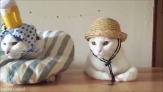 Лучшая подборка приколов со смешными котами :)