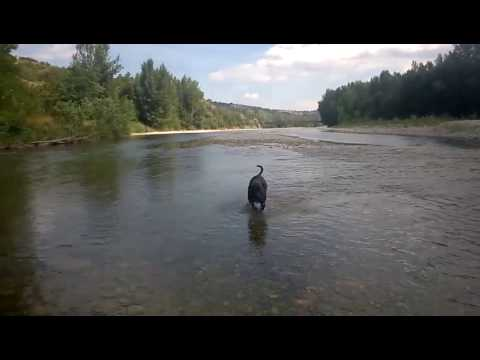 Video Elda