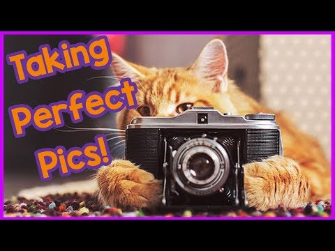 How to Take the Perfect Picture of Your Cat! Tips on Taking the Best Photos of Your Cat!