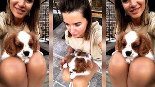 Бородина нашего нового члена семьи зовут Берти♥️ порода Кавалер кинг-чарльз-спаниель