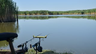 Фидерная ловля сазана на диких водоемах