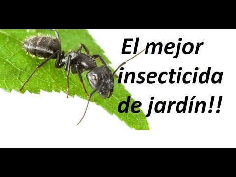 Como eliminar  todos los insectos de jardín de forma ecológica.