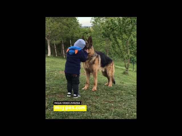 Flok – Video natečaj 2020 – Revija Moj Pes #Flok #MojPes