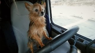 Trucker dog Lilly: tips and tricks of having a fur baby in the truck!