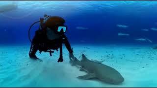 Подводный мир от National Geographic. 360° VR 3D video