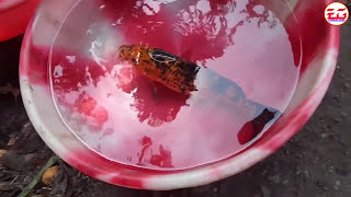 Fish Market In India Video Video