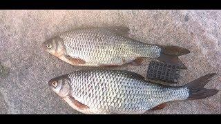 Форум питерского рыболова финский залив