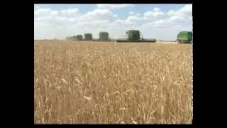В Западно-Казахстанской области собирают рекордный урожай зерновых