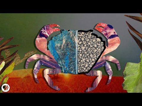 La semence de courge des helminthes