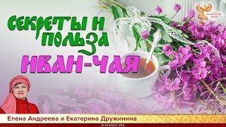 Tajomstvo a výhody Ivan čaja