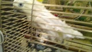 Прикол в зоопарке с попугаем(смотреть внимательно)