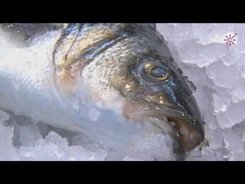 Las conservas de pescado. Isla Cristina. Huelva