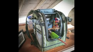 Green Cheek Conure in a Backpack, Part 1 of 2