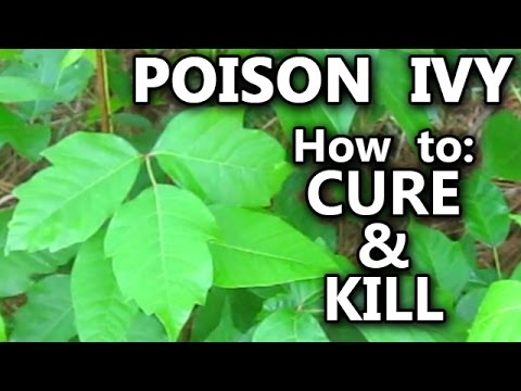 Video POISON IVY how to Treat Rash Cure Kill Identify the Vines and Plant Leaves stop the itch pet cat