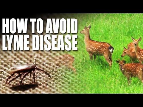 How to avoid Lyme Disease